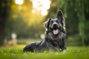 CBD Dog Treats: The Tastiest Benefits