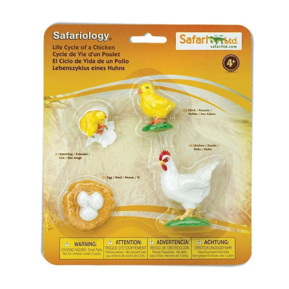Ciclo Vitale della Gallina Safari LTD - Shop Millemamme