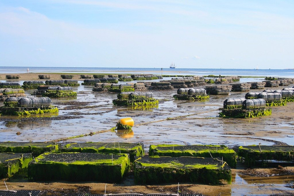 Aquaculture, oyster farm