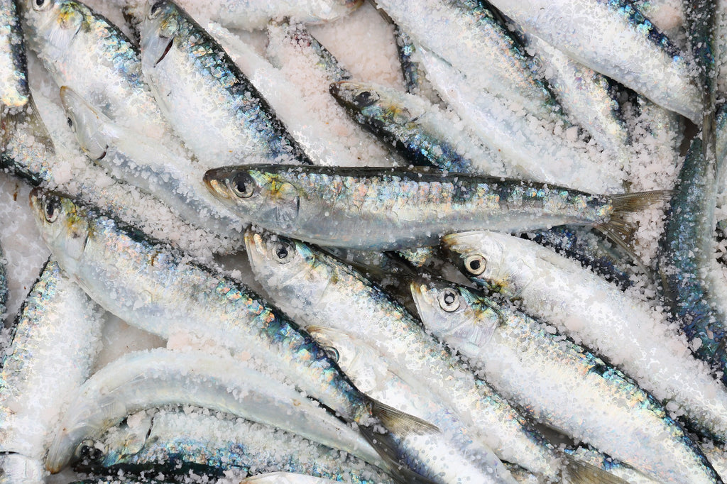 sardines for paleo diet