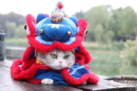 Lion Dance Costume for Your Cat