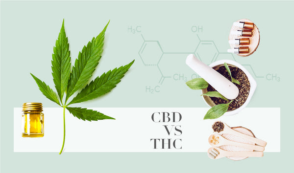 CBD vs THC All you need to know - ErthBay