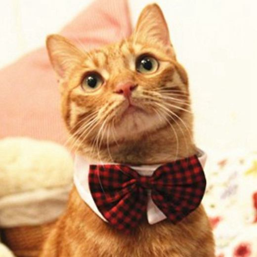 Pet Bow Ties Cats and Dogs Collar Pet Bow Tie