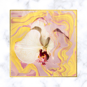 """Novella"" Yellow Orchid Limited Edition Fine Art Print by Sheri Vegas"