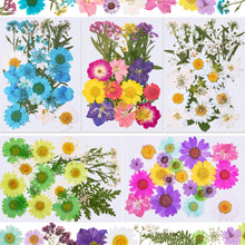 144 Pieces Dried Pressed Flowers Natural Dried Flowers Colorful Pressed Flowers Daisies Real Dried Flowers Leaves Petals for DIY Candle Resin Jewelry Nail Pendant Crafts Making and Decoration Supply