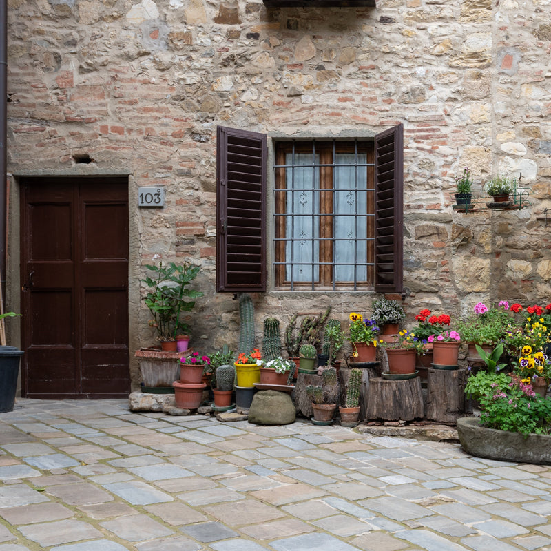 Plants for Containers and Patios