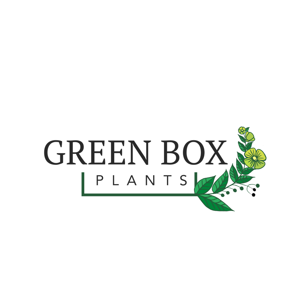 Green Box Plants