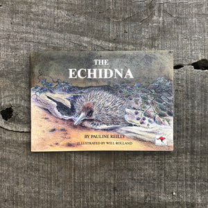 The Echidna by Pauline Reilly