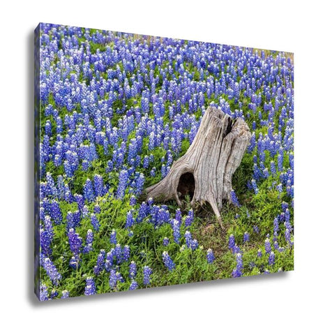 Image of Gallery Wrapped Canvas, Austin Beautiful Texas Bluebonnets Field And Tree Stump