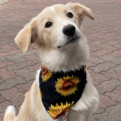 Sunflower Matching Dog Bandana