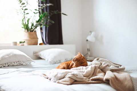 New mattress maintenance- How to remove pet smells from a bed and mattress