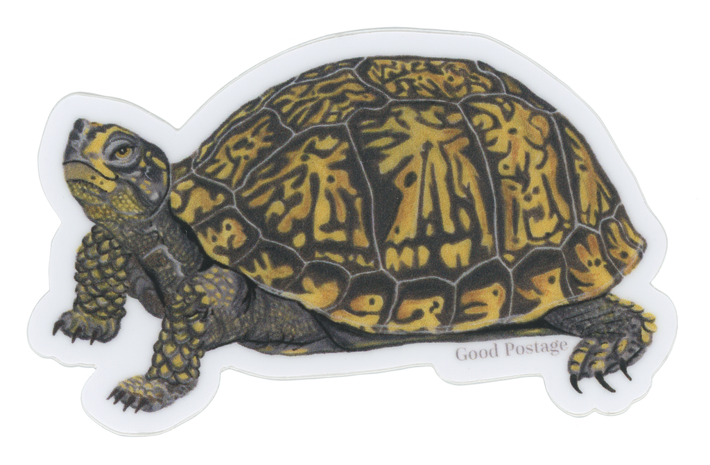 Box Turtle Sticker