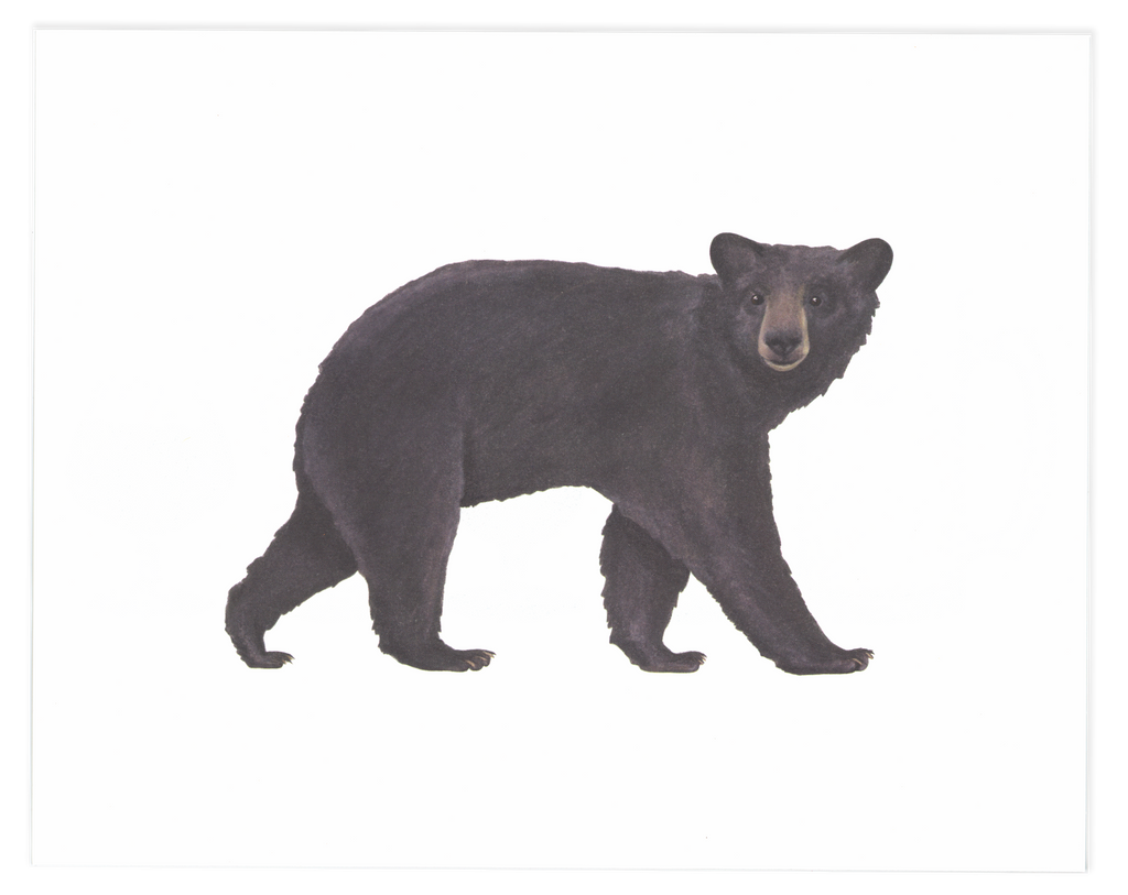 Black Bear Art Print