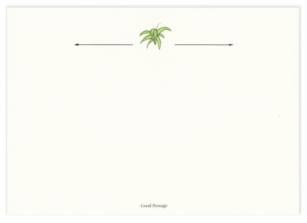 Spider Plant Notecard