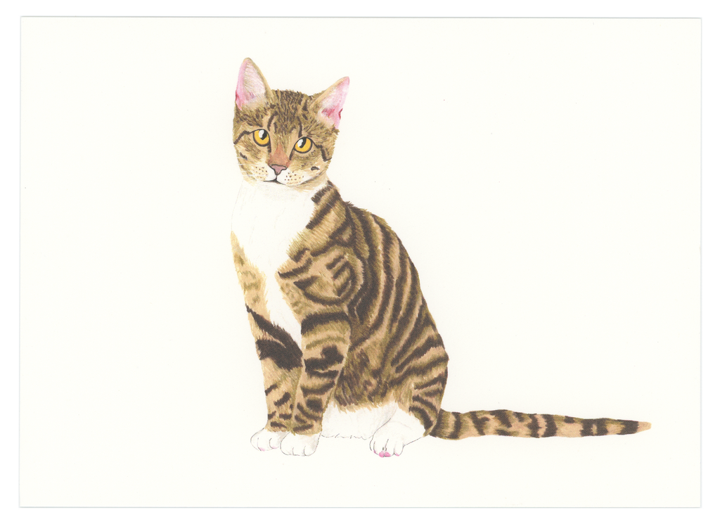 Brown Tabby Cat Art Print