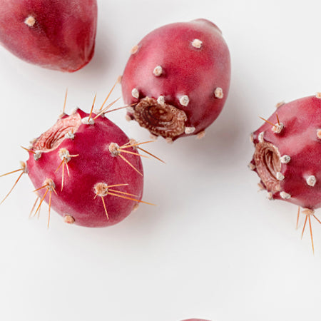 prickly pear seed on a white background