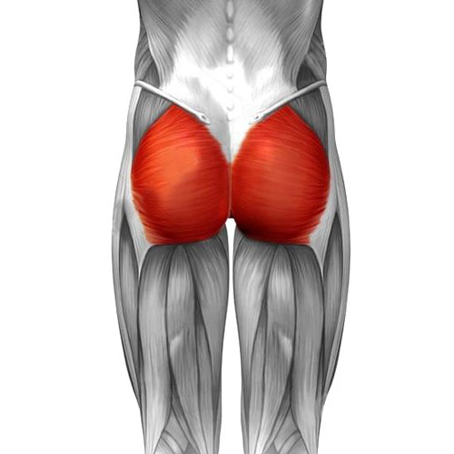 illustration of glutes