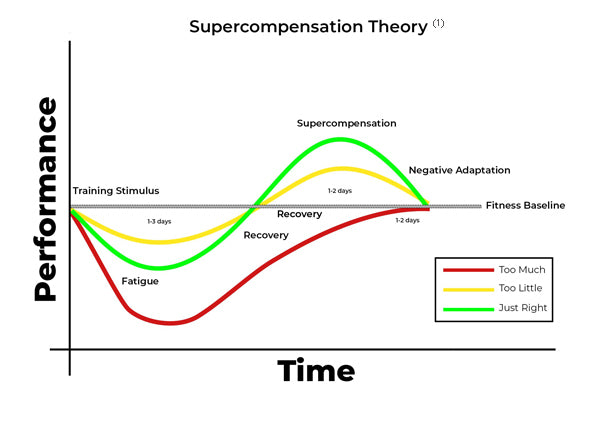 How Supercompensation Theory Impacts Workout Performance Over Time