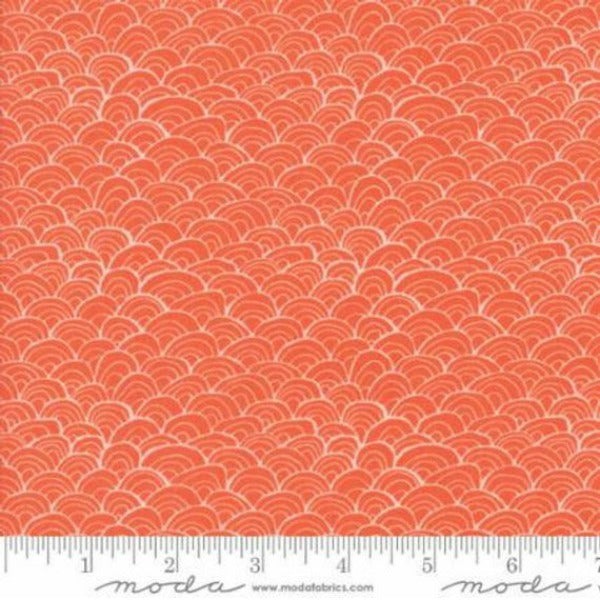 Midnight Garden by One Canoe Two - Shells in Coral (36025-20)
