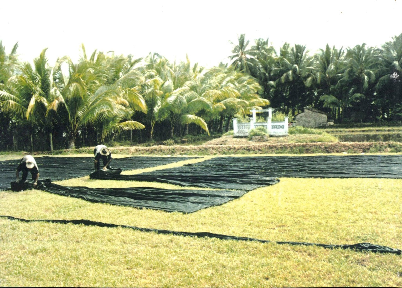 Lacquer silk cloth drying in a field