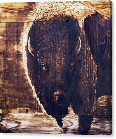 Bison Bust: CANVAS PRINT
