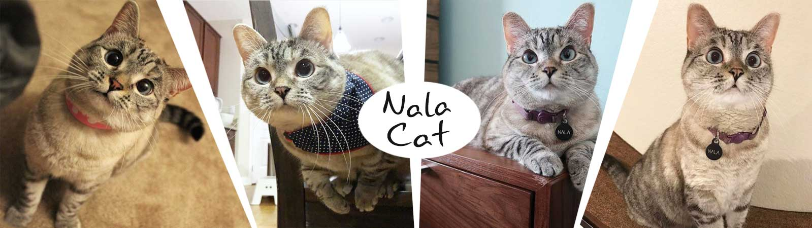 Nala Cat Pillows