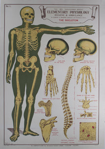c. 1900 The AL Education Series Elementary Physiology Hygiene & Ambulance Anatomical Chart - Golden Age Posters
