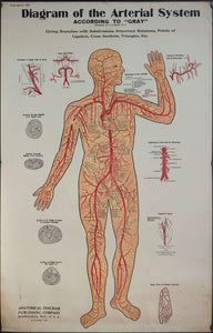 1894 Diagram of the Arterial System Anatomical Chart - Golden Age Posters