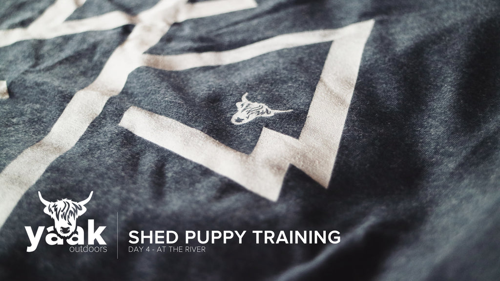 The Shed Hunters - Shed Hunting Puppy Training And First Swim