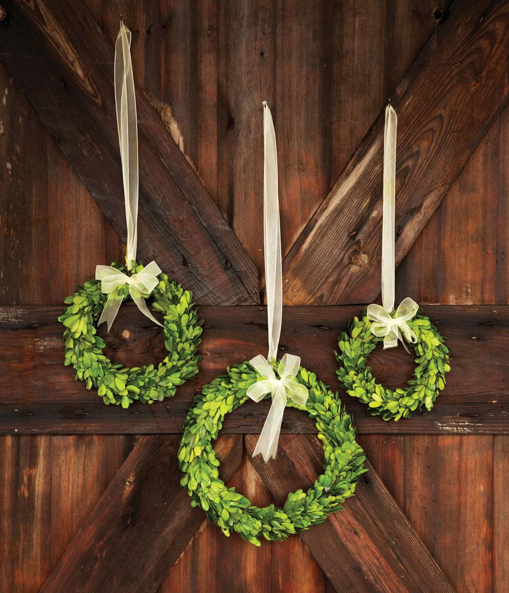 Preserved Boxwood Wreath with Ivory Ribbon - City Barn | Country Penthouse