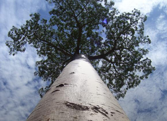 Looking up at a tree toward the sky