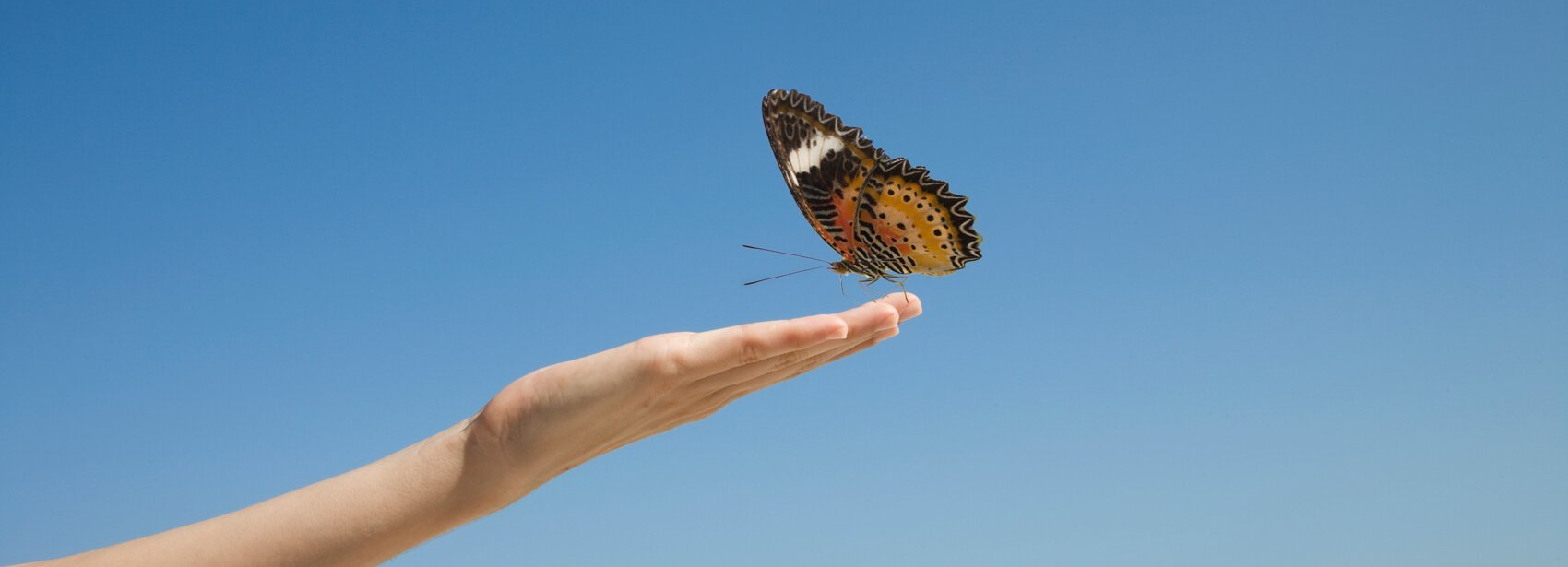 A hand reaching out to a butterfly