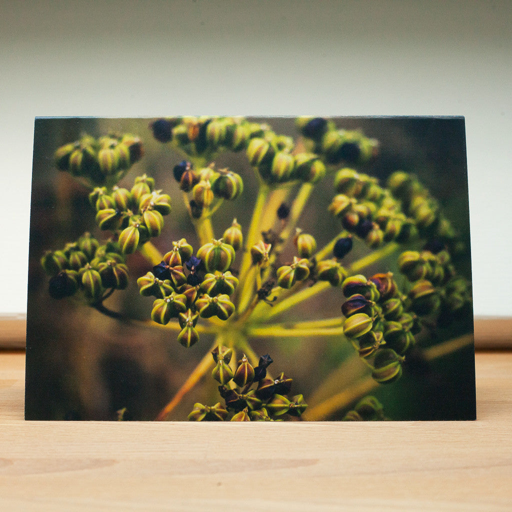 Art Card - Blank - Umbellifera Greeting Card