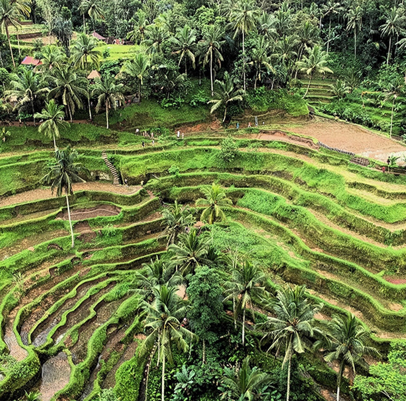 Destination: Ubud