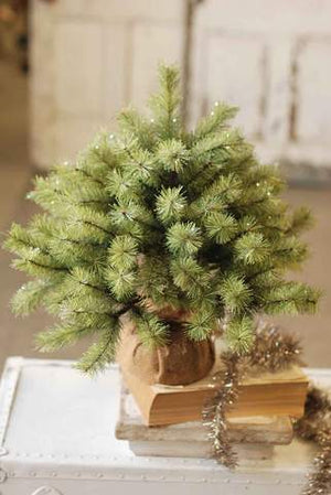 Little Giant Pine Tree