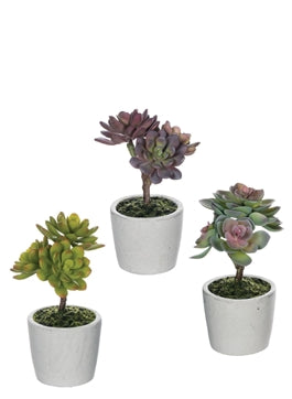 Potted Succulents, White Vessel