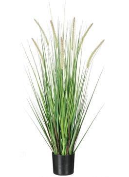 Dogtail Potted Grass
