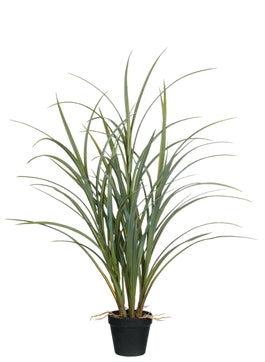 Potted Grass, 33""