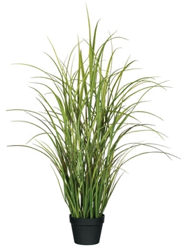 Potted Grass, 48""