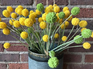 Billy Buttons