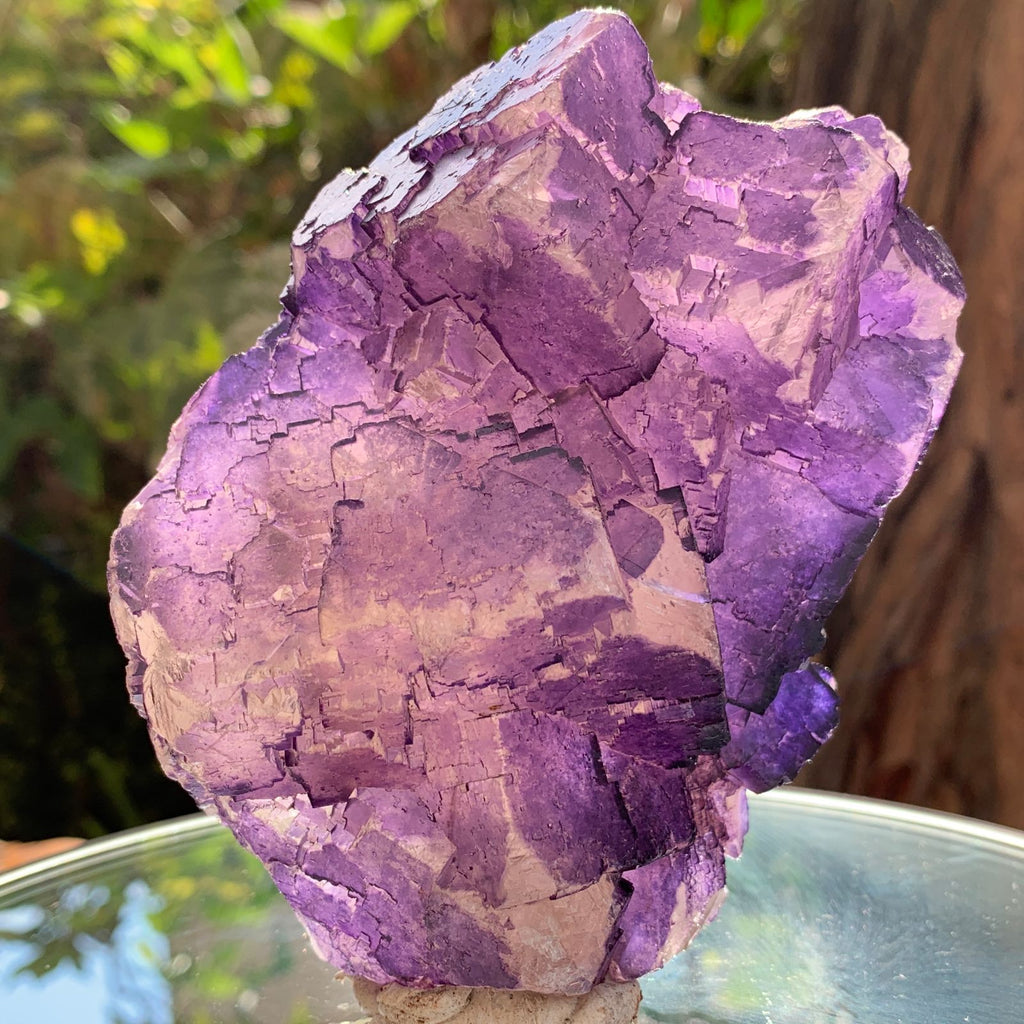 12cm 828g Purple Fluorite from Coahuila, Mexico
