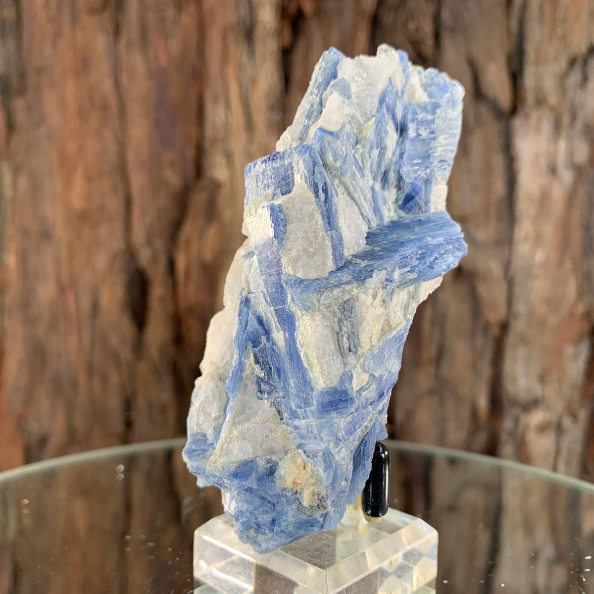 9cm 156g Kyanite with Quartz Crystal from Brazil