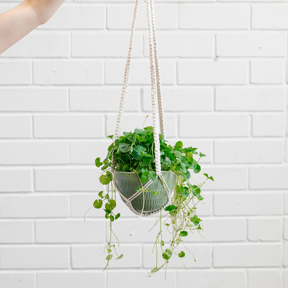 Macrame Hanging Planter Olive Green