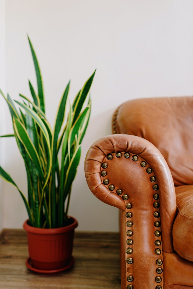 Armrest of brown leather sofa next to potted plant