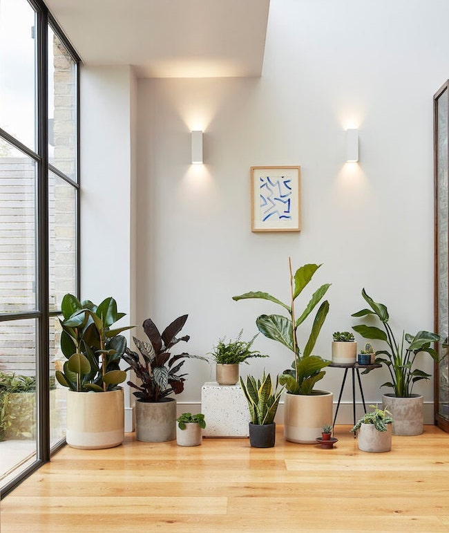 Plant pots in living room