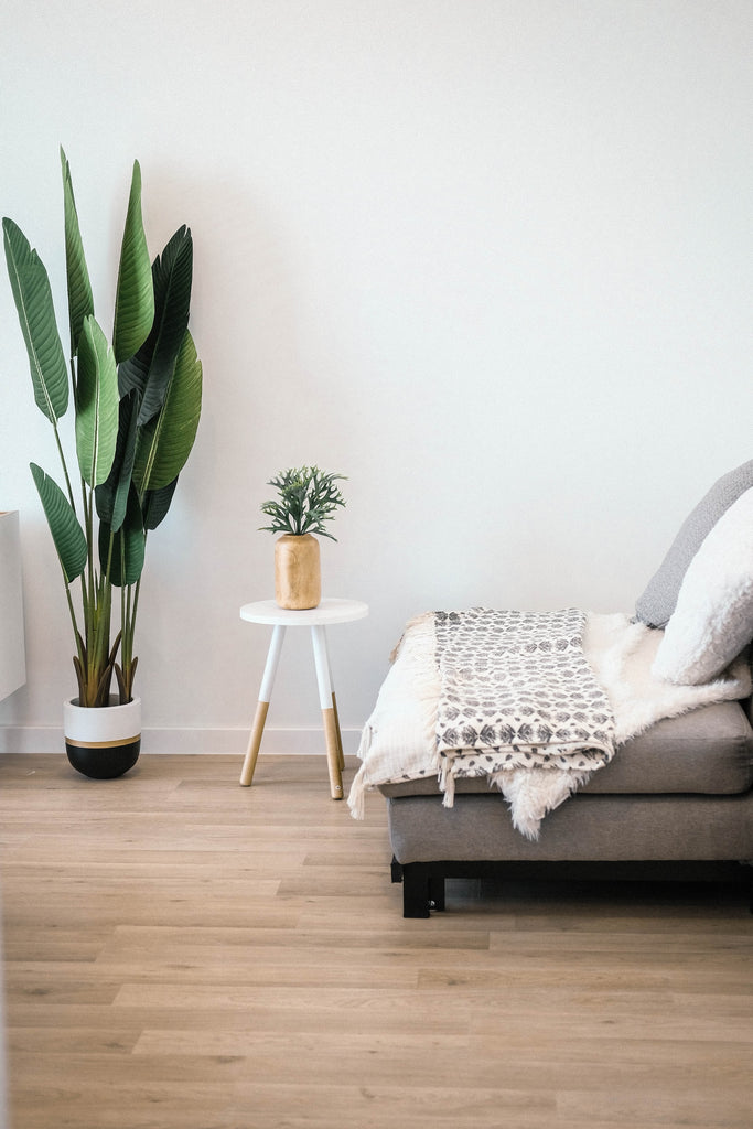 Indoor potted house plants next to sofa bed