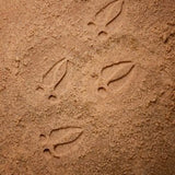 Let's investigate woodland footprints