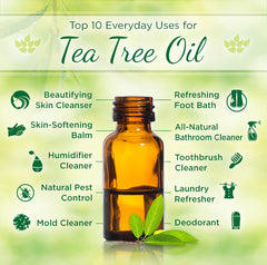 Uses of tea tree oil graphic