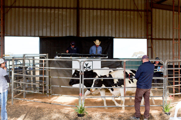 Vala's Autumn Feature Sale 2020 successfully held.