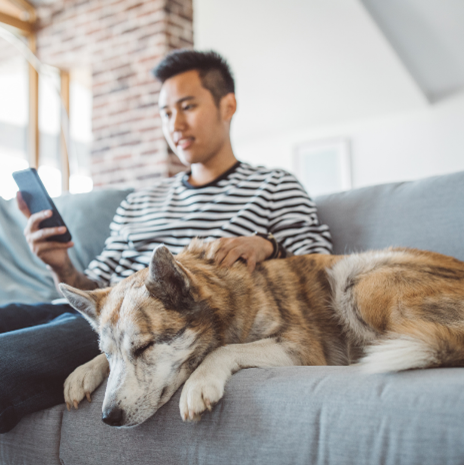 Young man sitting and smiling on couch with sleeping dog while staring at his phone.
